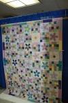 407 Donitas Daisies
